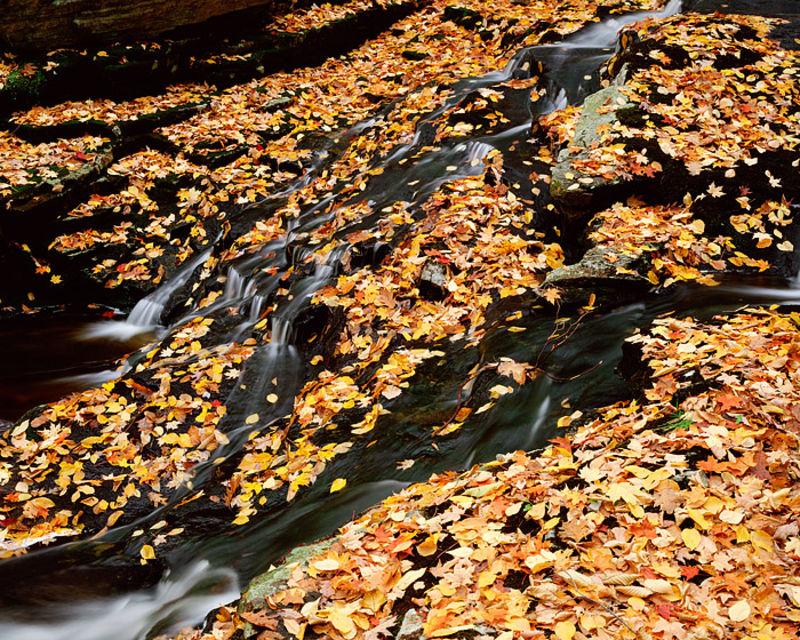 Tioratti Creek and Autumn Leaves