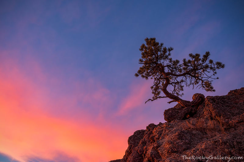 Walker Ranch,Sunrise,Boulder,January,Landscape,Photography,Open Space,Trees,Colorado,Boulder County