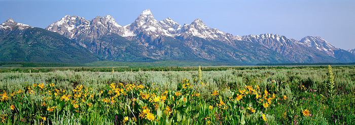 Grand Tetons, Wyoming, National Park, Antelope Flats, Wildflowers, photo
