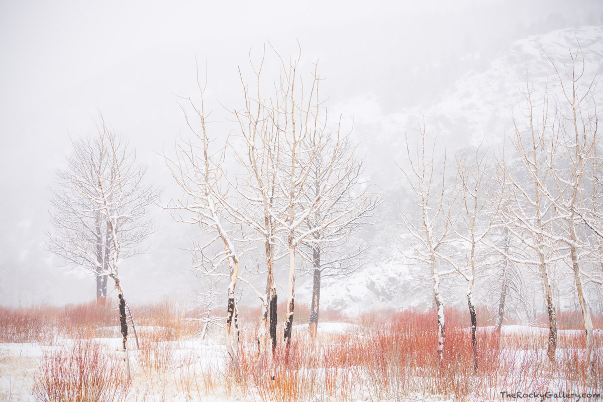 Moraine Park,Aspens,Willows,Fern Lake Fire,Landscape,Photography,RMNP,Colorado,Rocky Mountain National Park,Bear Lake Road,Estes Park,February , photo