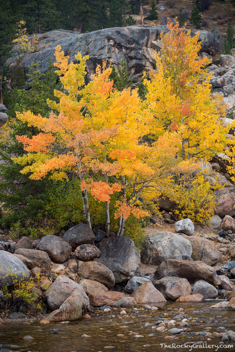 Roaring River,Mummy Range,Alluvial Fan,Autumn,Fall,Estes Park,Old Fall River Road,Rocky Mountain National Park,Colorado,RMNP,Landscape,Photography,Aspens,October, photo