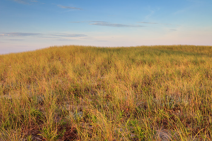 Dune grass shows off it's late Summer golden hue as high wispy clouds skirt over the Ocean and Beach. Just over the rise lies...