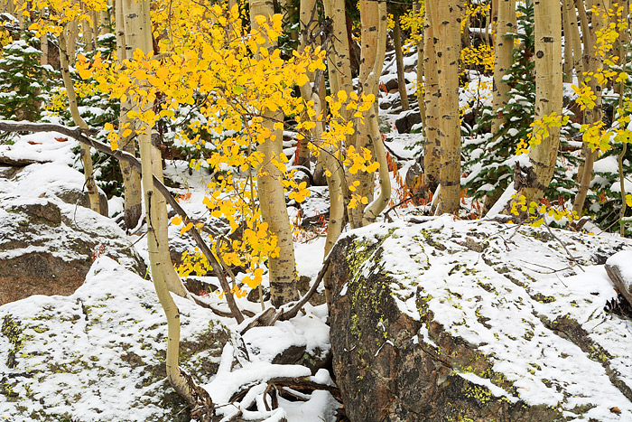 Rocky Mountain National Park,Colorado,Bear Lake,Aspens,snow,fall,hiking,trees,estes park,photographer, photo
