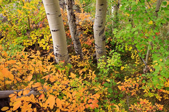 Rocky Mountain National Park, Colorado, Bear Lake, Glacier Gorge, Longs Peak, Aspens, Autumn, photo