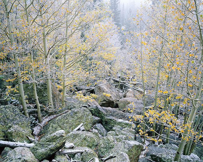 Rocky Mountain National Park, Bear Lake, Hallet Peak, Glacier Gorge, Longs Peak, Estes Park, Aspens, photo