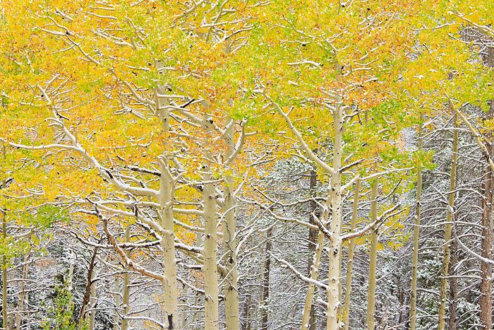 Rocky Mountain National Park, Colorado, Bear Lake, Road, Aspens, fall, Snow,Bear Lake, photo