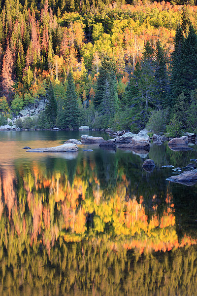 Rocky Mountain National Park, Colorado, Bear Lake, Autumn, Sunrise, Aspen, photo