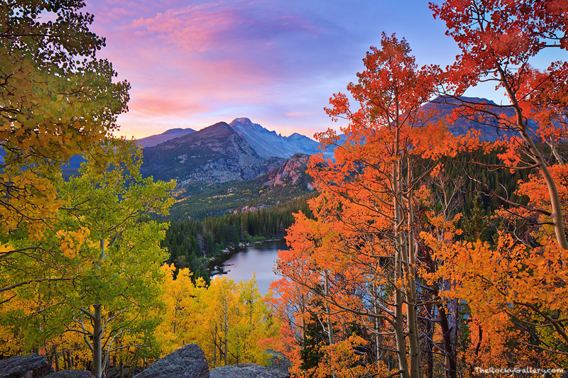 Bear Lake,Longs Peak,Aspens,Fall,Autumn,Rocky Mountain National Park,Colorado,tree,clouds,golden, photo