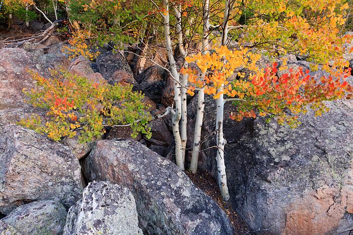 Rocky Mountain National Park, Colorado, Fall Color, Bear Lake Road, Aspen, Autumn, photo