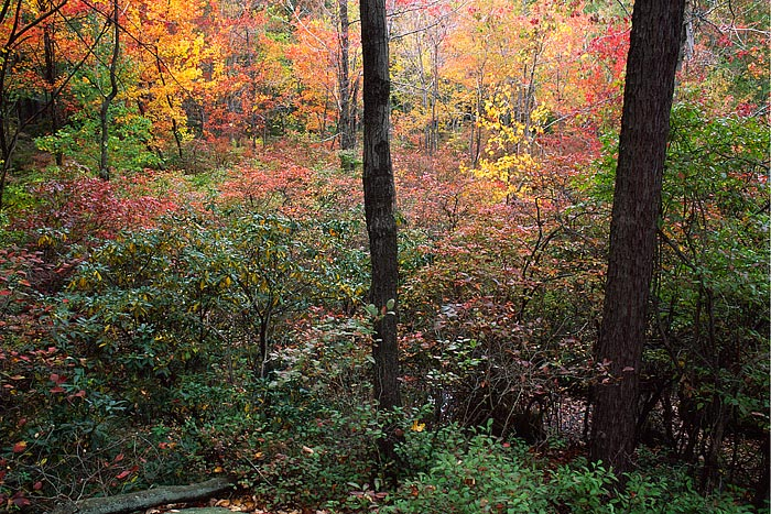 The trees near the summit of Bear Mountain begin to show there fall color. Bear Mountain State Park is located near the Hudson...