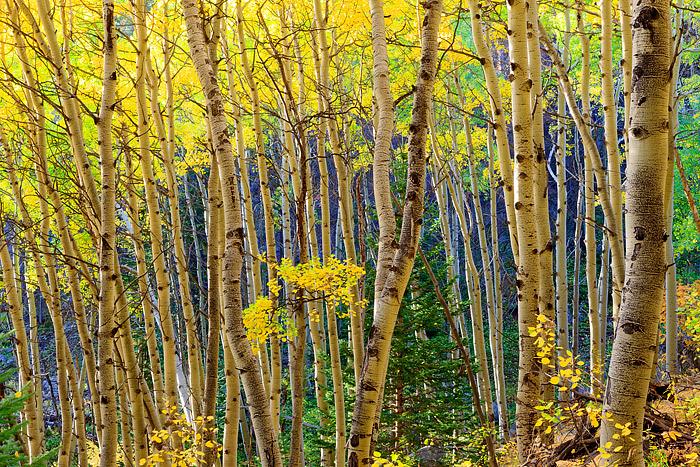 Autumn,Fall,Golden,Bear Lake,photograph,Rocky Mountain National Park,Colorado, photo