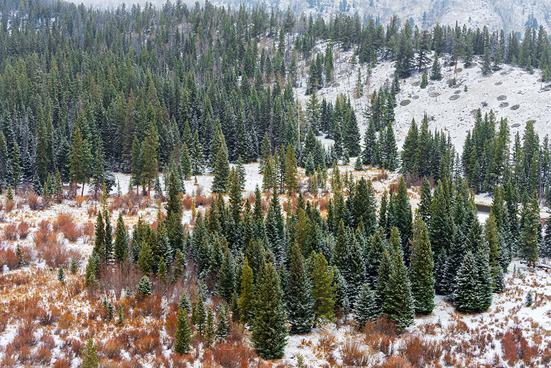 Rocky Mountain National Park,Colorado,Trail Ridge Road,Estes Park,RMNP,Beaver Ponds,Willows,Evergreens,Spruce,Snow,April,Spring,landscape,photography,Hidden Valley ,ponderosas, photo