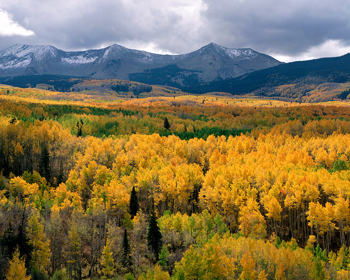 West Beckwith, West Elks, Crested Butte, Colorado, Fall, Aspens, photo