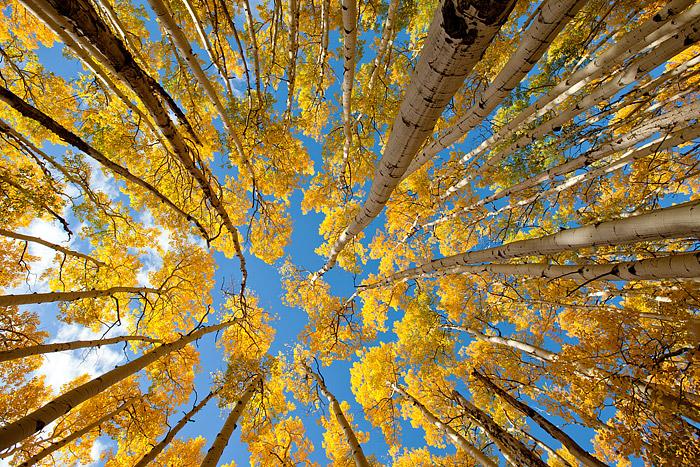 Rocky Mountain National Park, Colorado, Aspen's, Autumn, Bierstadt Moraine, photo