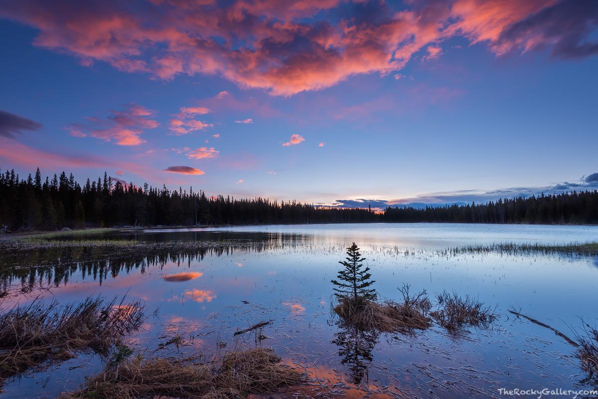 Rocky Mountain National Park,Colorado,RMNP,Estes Park,Bear Lake Road,Bierstadt Lake,Sunrise,Trailhead,Landscape,Photography,Tree,Reflection,Albert Bierstadt,Bierstadt Moraine,continental divide.May, photo
