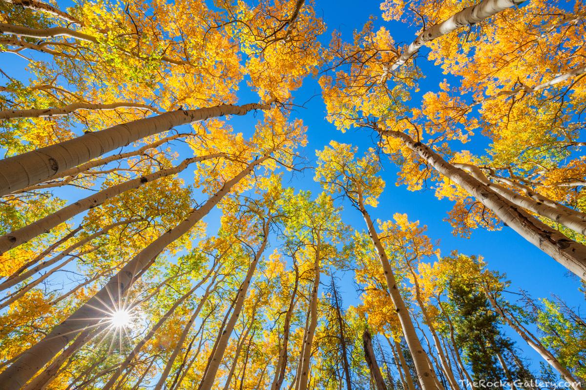 Bierstadt Moraine,Trailhead,Bear Lake Road,Aspens,Fall,Autumn,Golden,Sun,Estes Park,Colorado,RMNP,Rocky Mountain National Park, photo