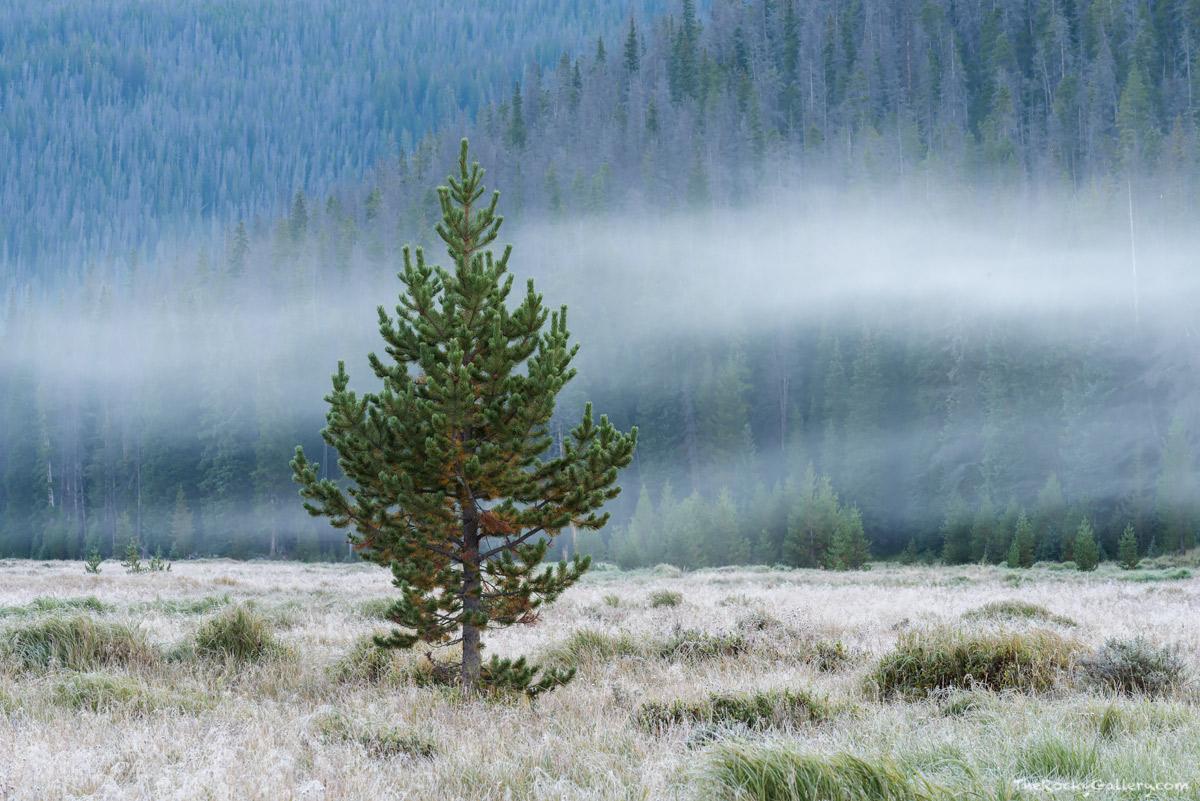 Big Meadows,West Side,RMNP,Grand Lake,Fog,Moody,Rocky Mountain National Park,Landscape,Trail Ridge Road,Colorado,August,Green Mountain,Trailhead,Moose, photo