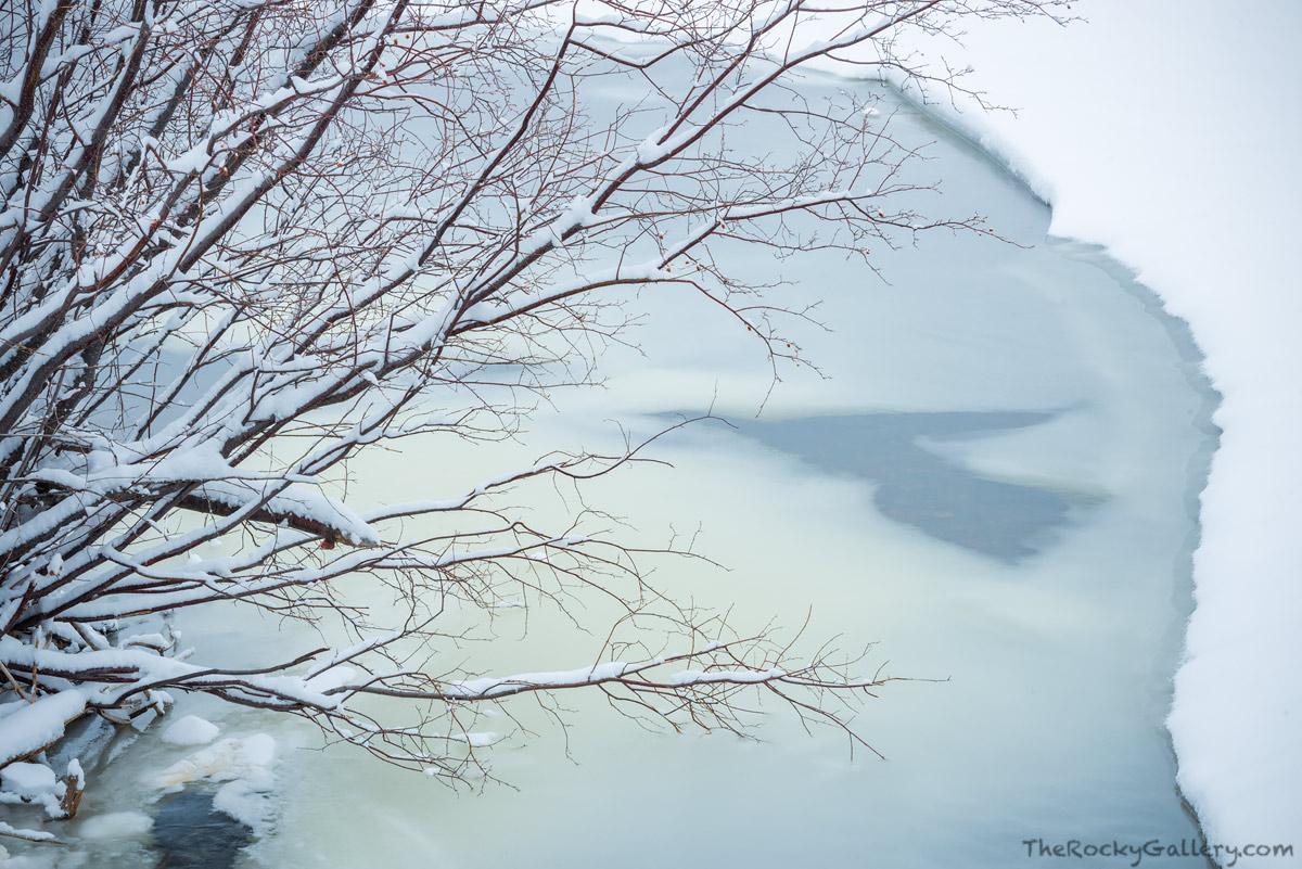 River Birch,Big Thompson,River,February,Winter,Frozen,Colorado,RMNP,Rocky Mountain National Park,Landscape,Photography,Moraine Park,snow,Estes Park, photo