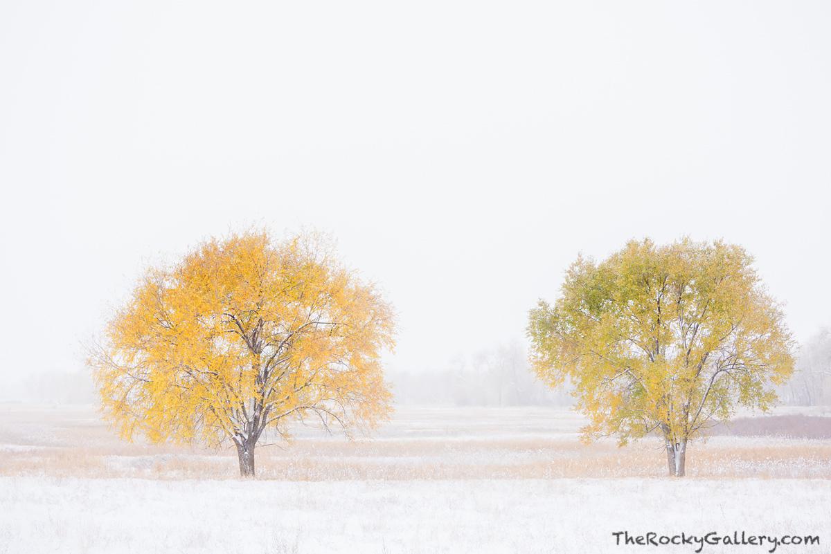 OSMP,Open Space and Mountain Parks,Bobolink,Trailhead,Boulder,Colorado,Storm,Trees,November,Landscape,Photography,Snow,Fall,Autumn,Front Range,Seasons , photo