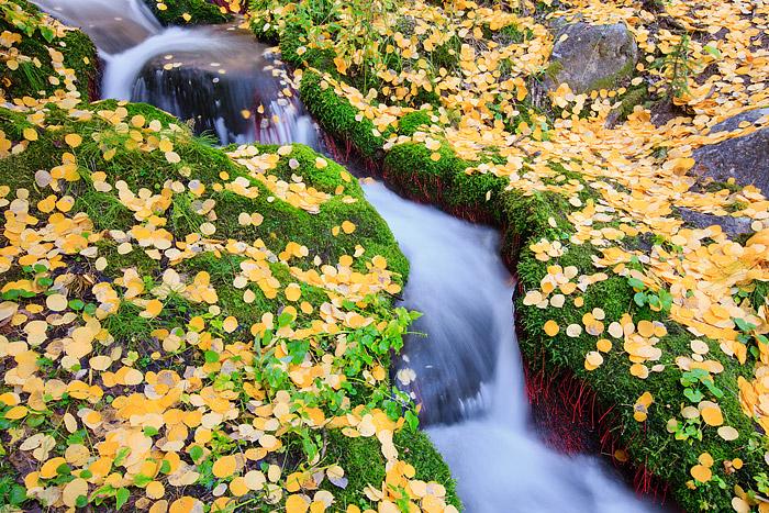Rocky Mountain National Park, Colorado, Boulder Brook, Autumn, Fall, Aspen, photo