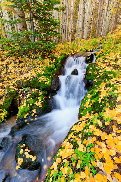 Rocky Mountain National Park, Colorado, Autumn, Boulder Brook, Aspen, Fall, photo