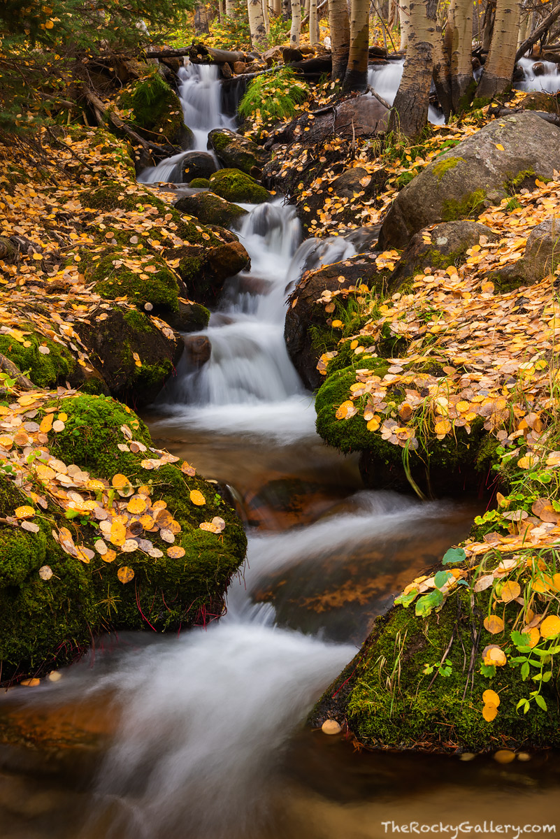 Rocky Mountain National Park,Colorado,RMNP,Estes Park,Landscape Photography,Boulder Brook,Fall,Autumn,Stream,Aspens, photo