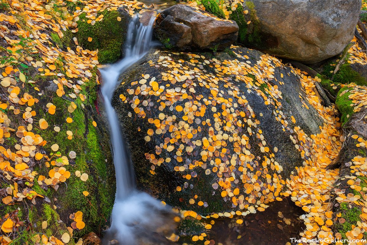 Boulder Brook,Storm Pass Trailhead,Bear Lake Road,Autumn,Fall,Landscape,Photography,RMNP,Colorado,Aspen,Leaves,Rocky Mountain National Park,Estes Park,stream, photo