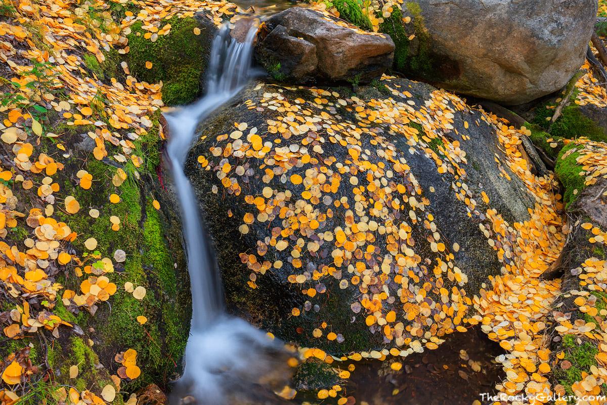Boulder Brook,Storm Pass Trailhead,Bear Lake Road,Autumn,Fall,Landscape,Photography,RMNP,Colorado,Aspen,Leaves,Rocky Mountain National Park,Estes Park,stream, photo