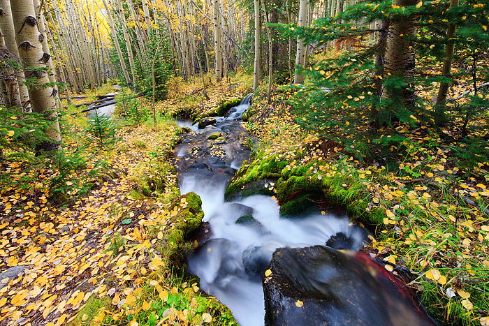 Colorado,Rocky Mountain National Park,Boulder Brook,Golden,Aspen,Autumn, photo