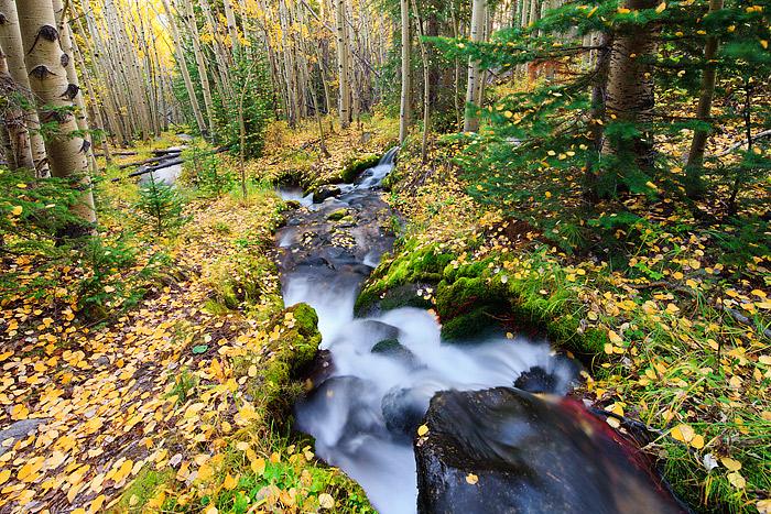 Colorado,Rocky Mountain National Park,Boulder Brook,Golden,Aspen,Autumn, photo
