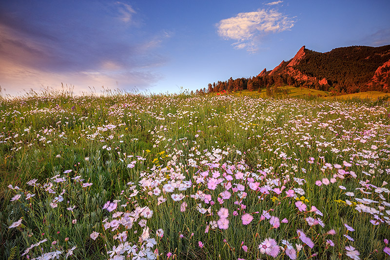 Boulder,Colorado,Open Space and Mountain Parks,OSMP,Chautauqua, Park,Meadow,wildflowers,sunrise,flatirons, photo