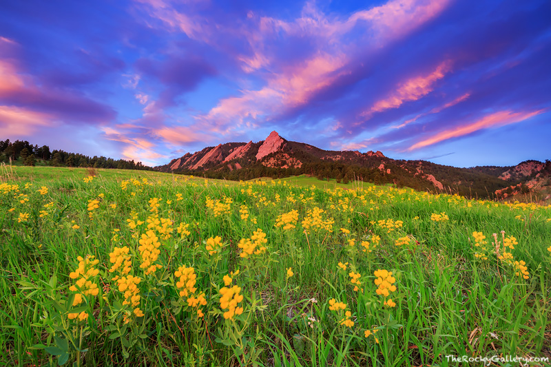 Boulder,Chautauqua,Meadow,Park,Boulder,Colorado,Spring,Wild Flowers,Flatirons,landscape,photography,sunrise,flowers,OSMP, photo
