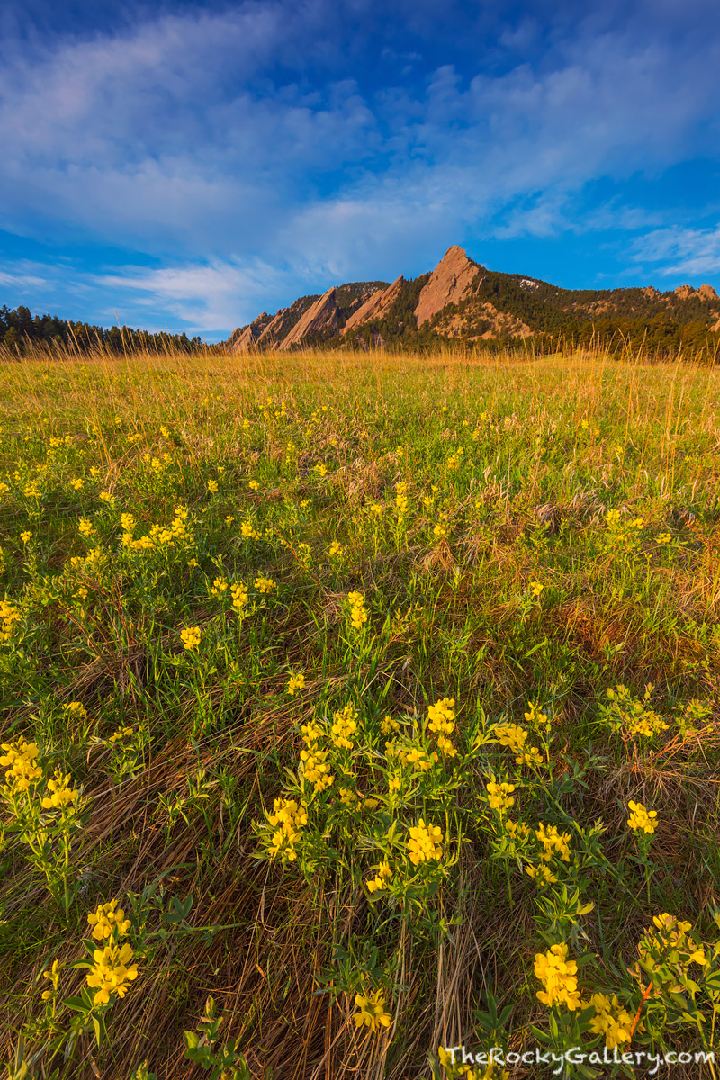 Chautauqua Park,Meadow,Boulder,Colorado,The Flatirons,Golden Banner,Wildflowers,Spring,Sunrise,Landscape,Photography,OSMP,Open Space and Mountain Parks,April , photo
