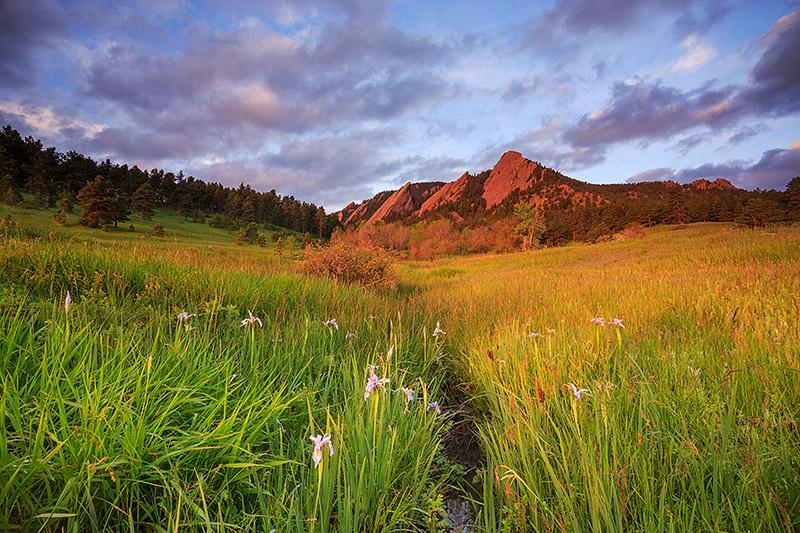 Boulder,Colorado,Chautauqua,Park,Meadow,Wildflowers,Iris,Purple,Open Space,OSMP,postcard,sunrise, photo