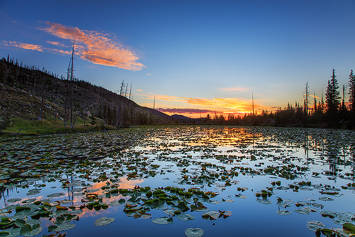 Chickadee Pond,Wild Basin,Rocky Mountain National Park,Colorado,pond lilies,reflections, photo