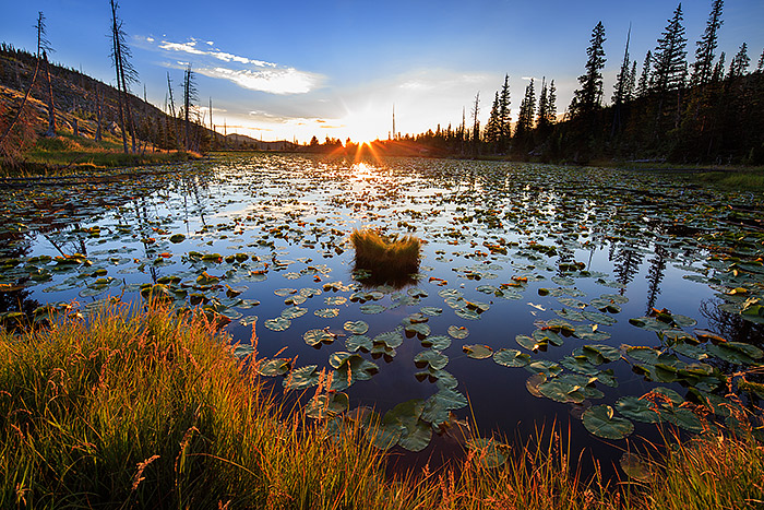 Chickadee Pond,Rocky Mountain National Park,Colorado,Wild Basin,Sunrise,Lilly Pads,Ouzel Lake,Bluebird Lake, photo