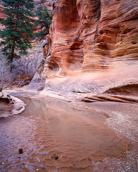 Cottonwood Creek slows to a trickle in Zion National Park. The mud blends nicely with the desert varnish on the sandstone walls...
