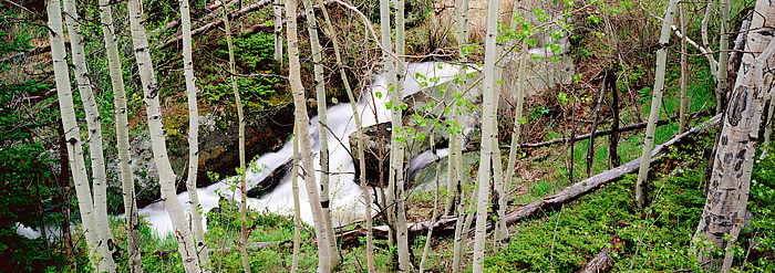 Rocky Mountain National Park, Colorado, Cow Creek, Aspens, Summer, photo