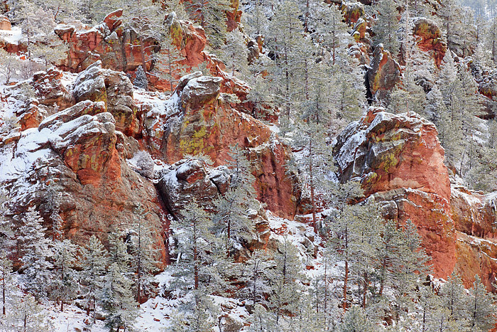 Snow and Hoar frost clings to the tree's along the slopes of Boulder's Crown Rock formation on Flagstaff Mountain. The reddish...