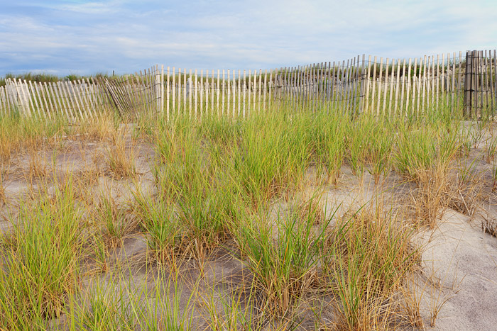 Grasses line the Dune Fence along Cryder Beach in Southampton, New York.