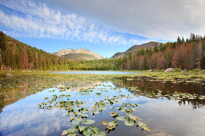 Rocky Mountain National Park, Cub Lake, Colorado, Moraine Park, Pond lillies, photo
