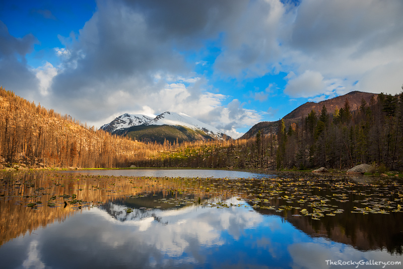 Cub Lake,Stones Peak,Moraine Park,Reflection,Fern Lake Fire,Trailhead,Estes Park,Hiking,Landscape,Photography,RMNP,Rocky Mountain National Park,Colorado,lilys,may, photo