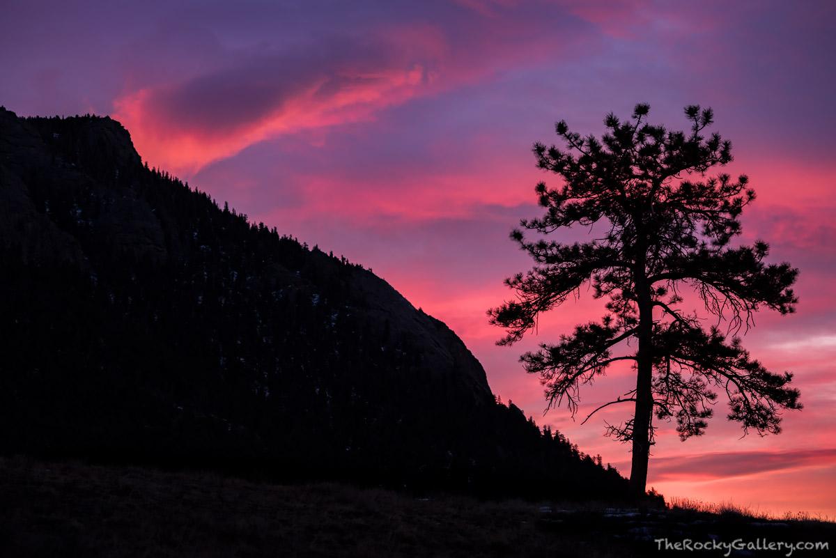 Deer Mountain,Estes Park,March,RMNP,Trail Ridge Road,Rocky Mountain National Park,Sunrise,Landscape,Photography,Colorado,Skies,trees, photo