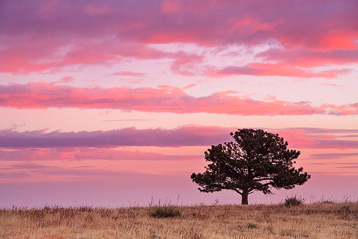 Boulder,Colorado,Open Space and Mountain Parks,OSMP,Sunrise,Pastels,tree,plains, photo