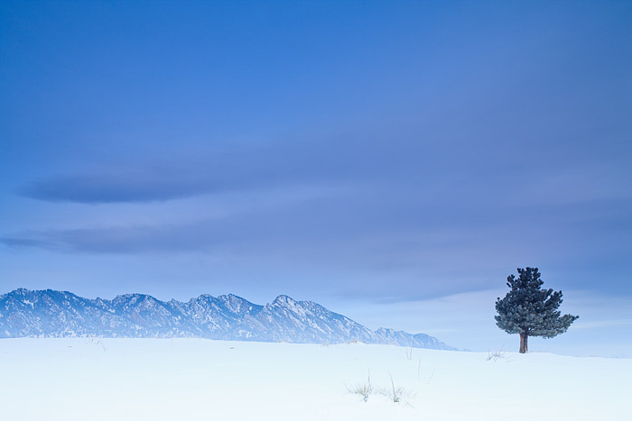 Boulder, Colorado, Doudy Draw, Open Space and Mountain Parks, OSMP, Winter, Tree, photo