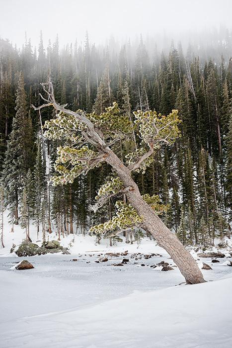 Dream Lake,Snow,Winter,RMNP,Estes Park,Hallett Peak,Rocky Mountain National Park,Colorado,Photography,Landscape,Trees,Ice,Fog,Snow,Lake,winter,January, photo