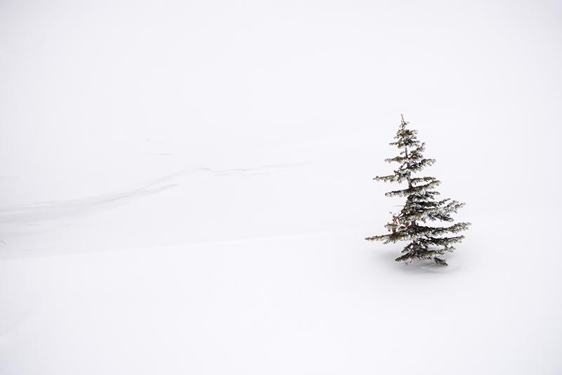 Dream Lake,Bear Lake,RMNP,Rocky Mountain National Park,Colorado,Winter,January,Estes Park,Landscape,Photography,Tree,Pine,Snow, photo