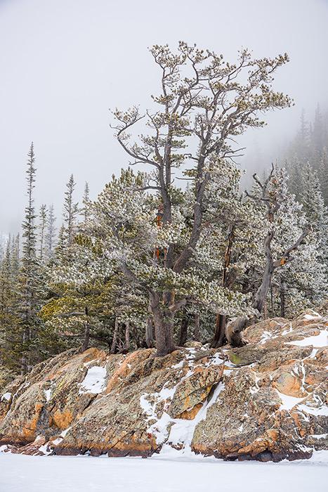 Dream Lake,Trees,winter,Estes Park,RMNP,Rocky Mountain National Park,Colorado,Winter,Snow,Mountains,Hallett Peak,Flattop Mountain,Krummholz, photo
