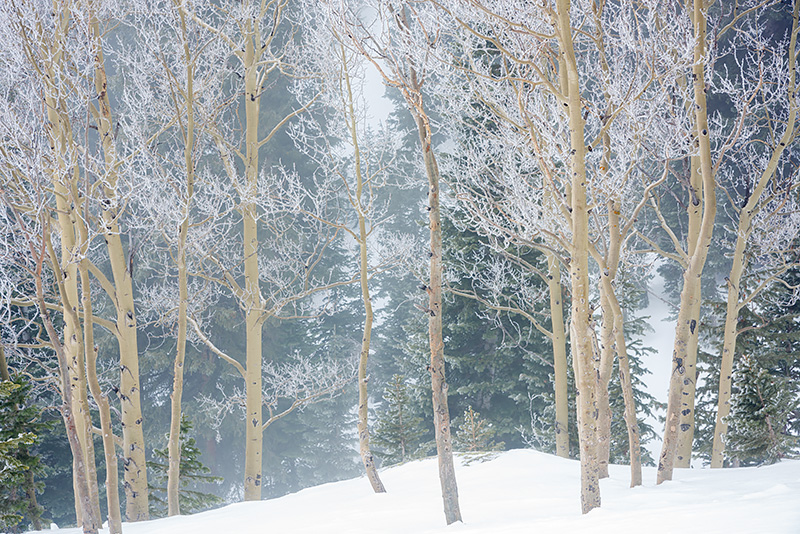 Rocky Mountain National Park,Colorado,Aspens,Frost,Trees,Estes Park,RMNP,Dream Lake,Bear Lake,Winter,January,snow, photo