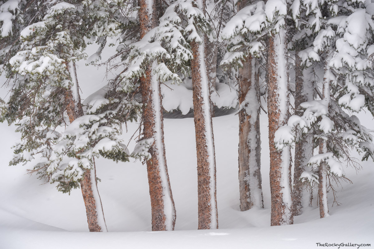 March,Snow,Dream Lake,Trailhead,Bear Lake Road,Estes Park,RMNP,Rocky Mountain National Park,Colorado,Spruce,Pines,Trees, photo